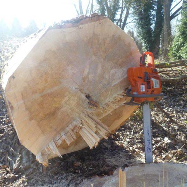 Gros tronc découpé à la tronçonneuse