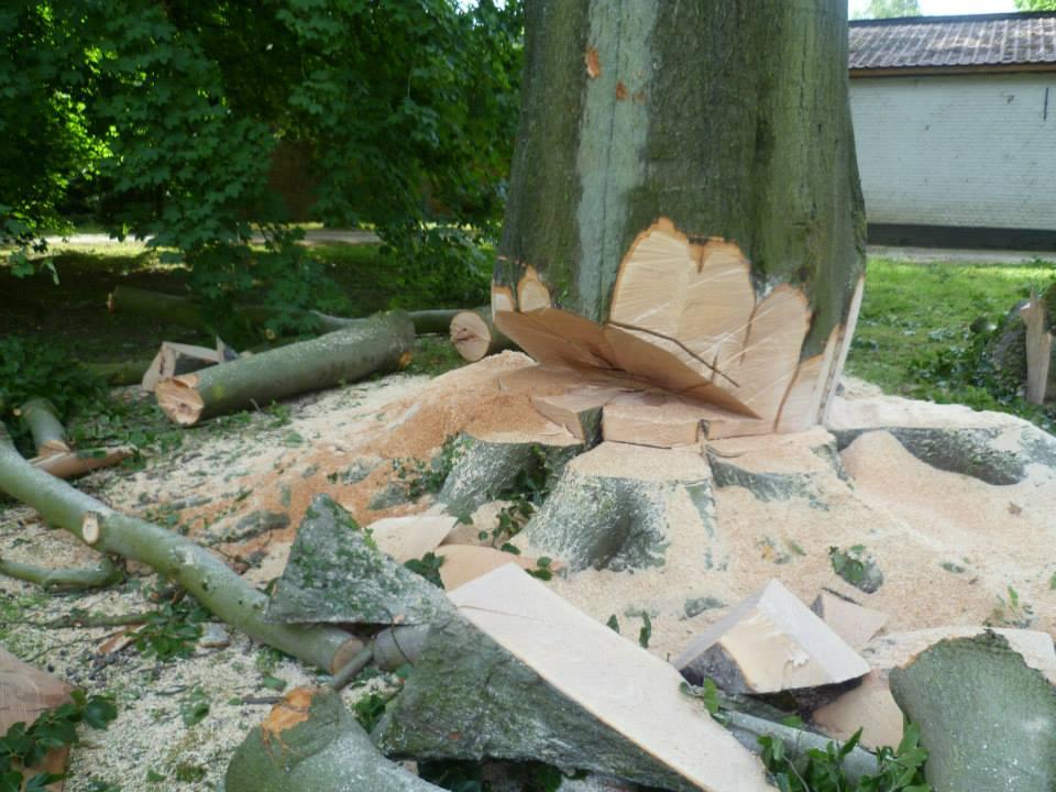 Découpage d'un tronc moyen d'arbre