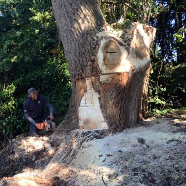 Arbre découpé avec une tronçonneuse par un arboriste