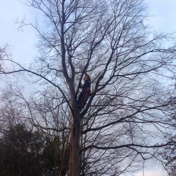 Élagage des branches d'un arbre par un arboriste 11