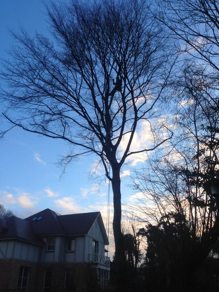Élagage des branches d'un arbre par un arboriste 12