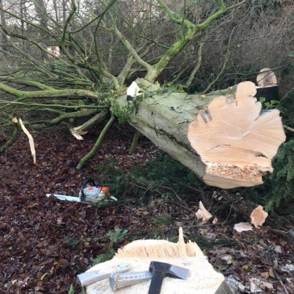 Arbre découpé avec une hache par un arboriste