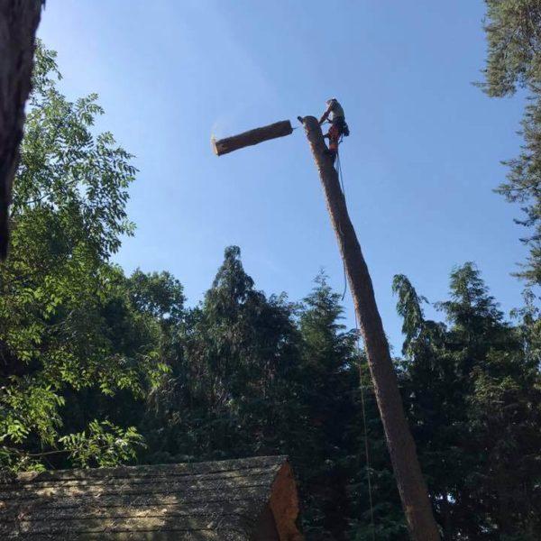 Élagage des branches d'un arbre par un arboriste 6