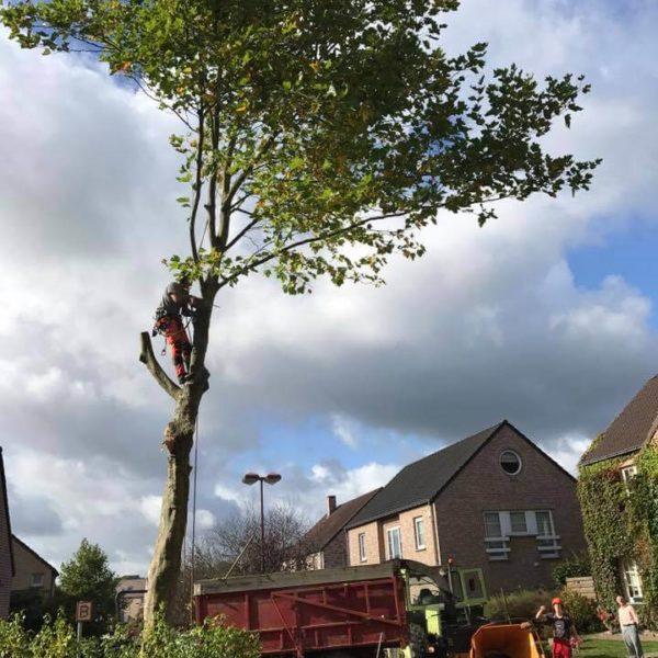 Démontage d'un arbre sur une chaussée